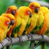 Feeling pressure of new tourism realities, Caribbean nations begin teaching parrots to speak Chinese