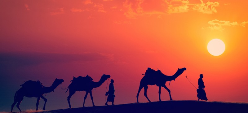 Camels safari at sunset