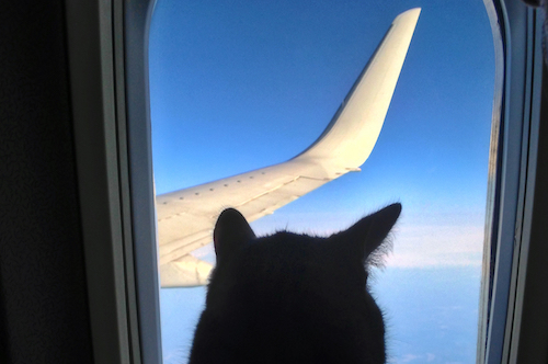 Animals on Airplanes Cat